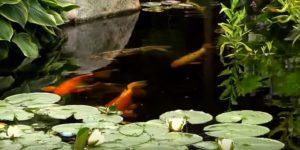 hồ cá koi biên hoà