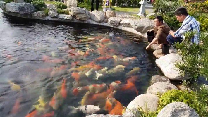 hồ cá Koi của Hoài Linh